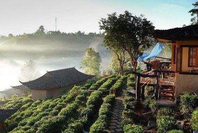 tea tasting festival at ban rak thai, tea tasting festival in mae hong son, tea tasting festival mae hong son, tea tasting festival